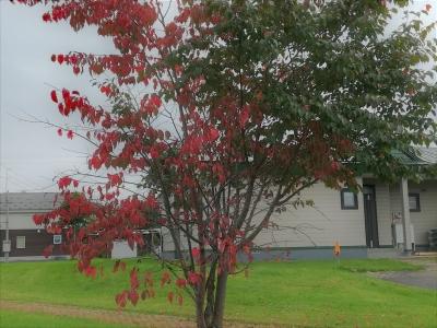 秋のはじめ
