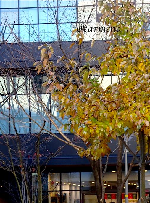 窓と黄の樹木