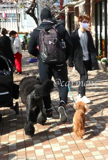 犬と桜とスタバ常連