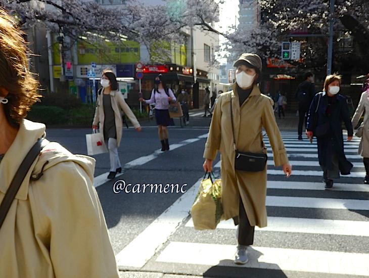 桜咲く横断歩道