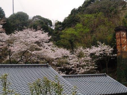 桜1(2020-03-28)