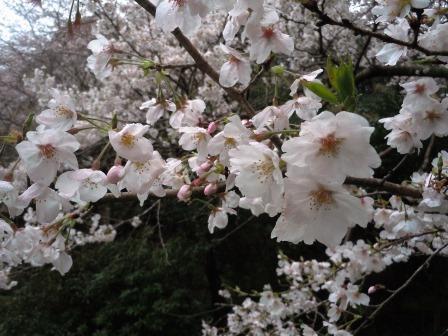 桜9(2020-03-28)