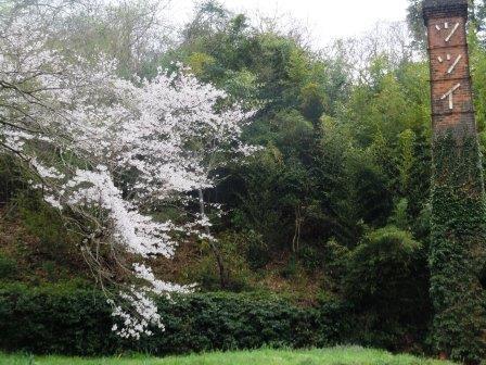 桜16(2020-03-28)
