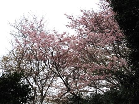 桜17(2020-03-28)
