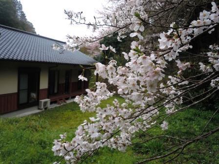 桜19(2020-03-28)