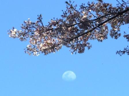 桜と月1(2020-04-04)