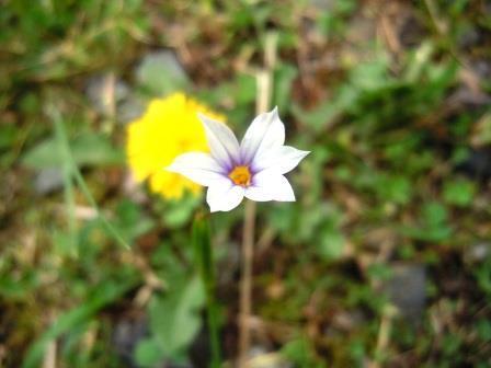 薄紫小花1(2020-05-06)