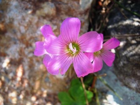 紫小花1(2020-05-13