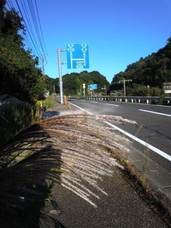 ススキ4(2020-10-14)(タテ)
