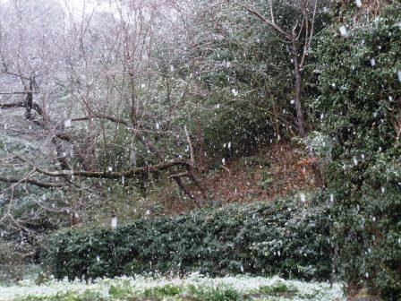 初雪10(2020-12-15)
