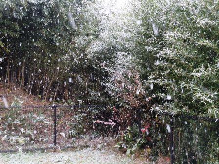 初雪11(2020-12-15)