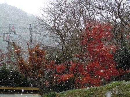 初雪12(2020-12-15)