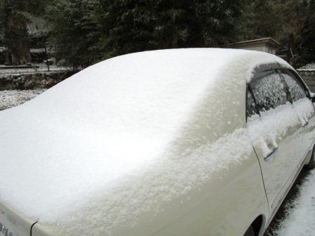 雪の朝4(2020-12-31)