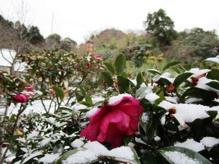 雪の朝11(2020-12-31)