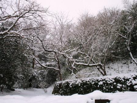 雪景色2(2021-02-18)