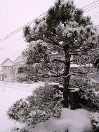 雪景色6(2021-02-18)
