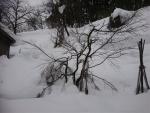 紅葉が雪に埋まる
