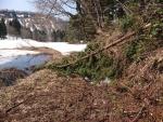 雪で倒木が農道をふさぐ
