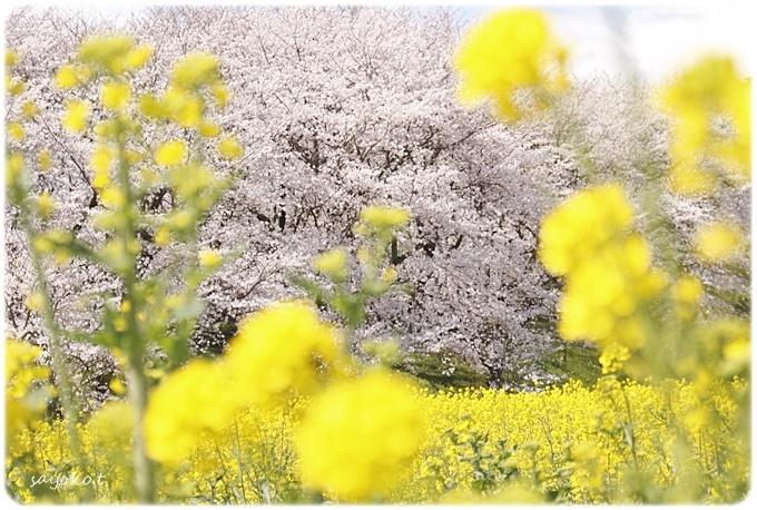 sayomaru29-591.jpg