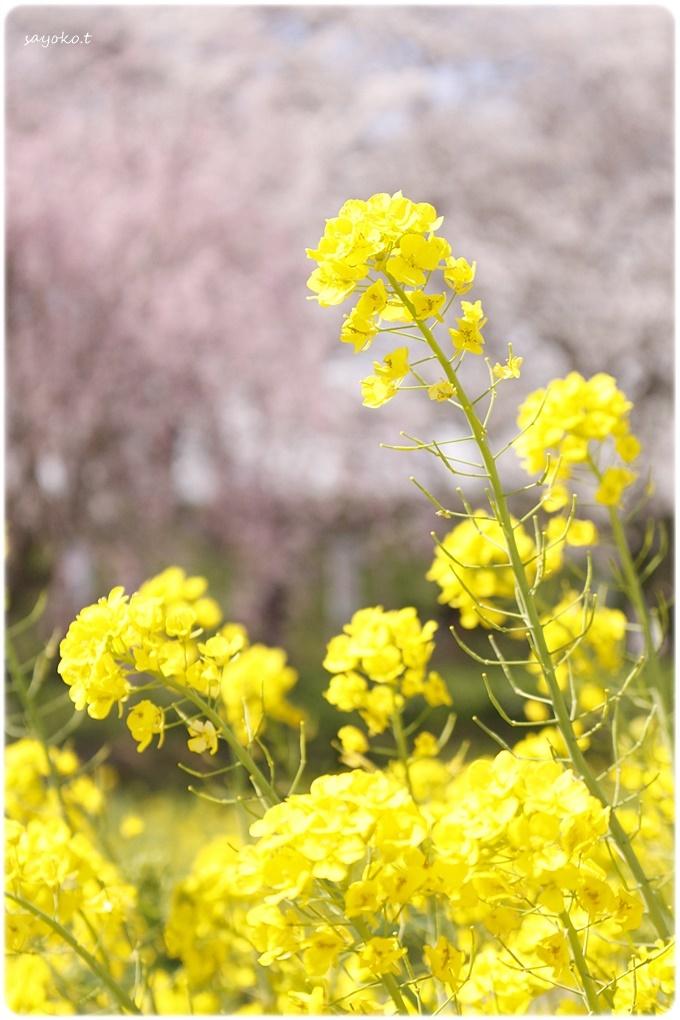 sayomaru29-596.jpg