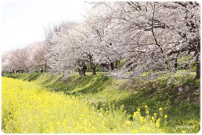 sayomaru29-597.jpg