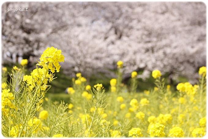 sayomaru29-598.jpg