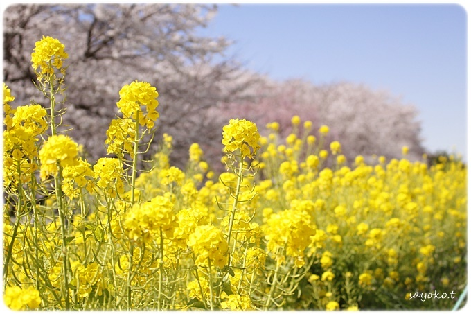 sayomaru29-599.jpg
