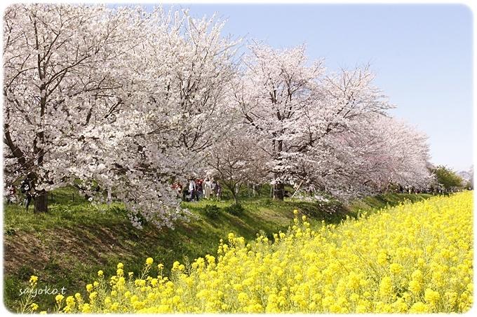 sayomaru29-601.jpg