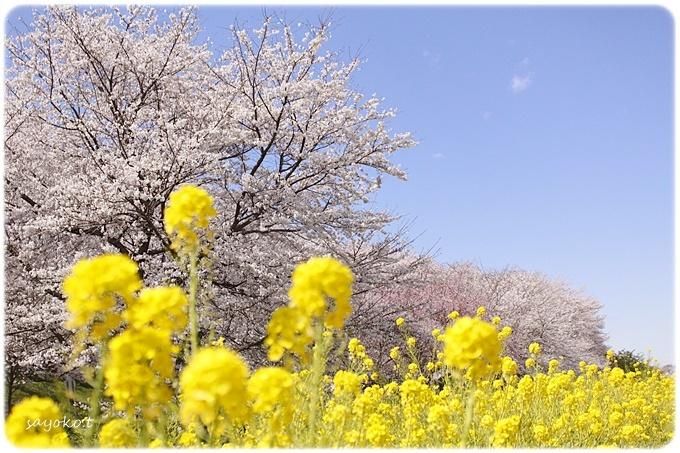 sayomaru29-602.jpg