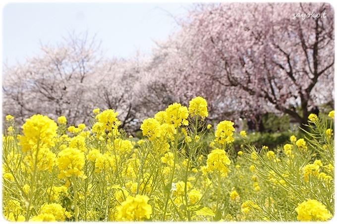 sayomaru29-605.jpg