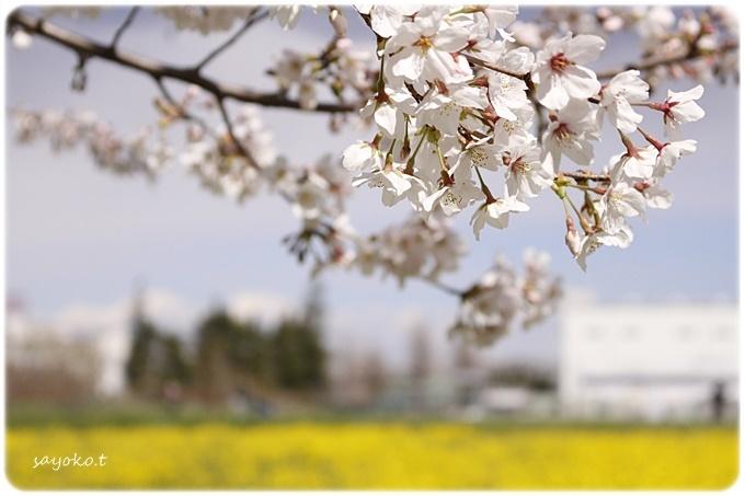 sayomaru29-608.jpg