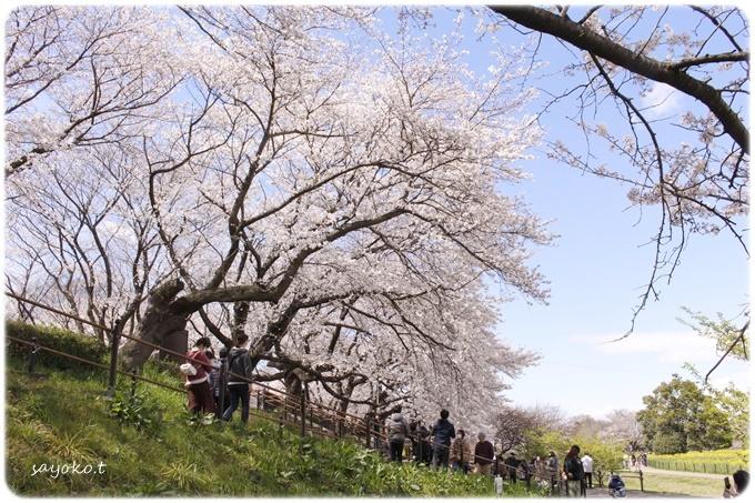 sayomaru29-610.jpg