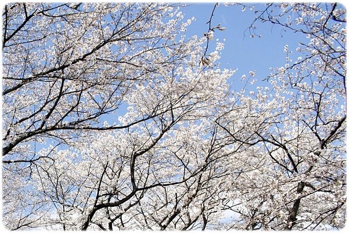 sayomaru29-615.jpg