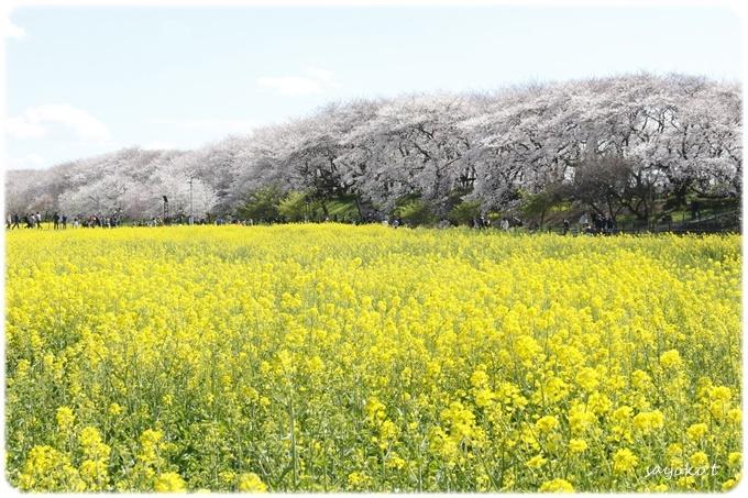sayomaru29-620.jpg