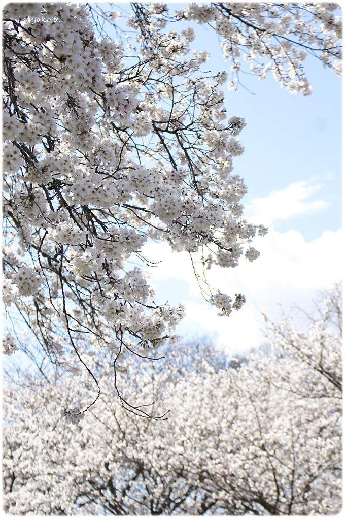 sayomaru29-621.jpg