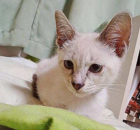 ウサコ20200727a