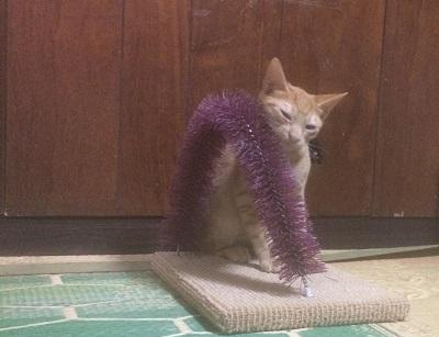 子猫パワー