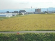 ブログ2稲