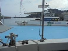 ブログ7イルカ船