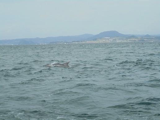 ブログ10イルカと海