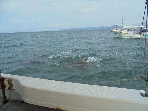 ブログ16船とイルカ