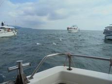 ブログ19船とイルカ