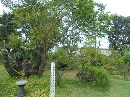 ブログ38高円宮殿下お手植え木