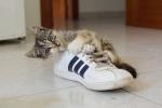 靴ひもで遊ぶ猫