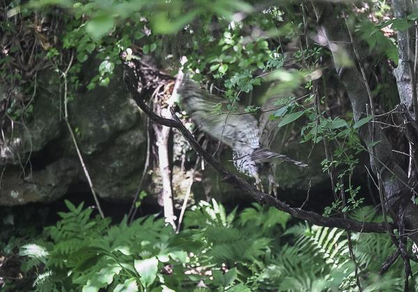 200530フクロウ-17