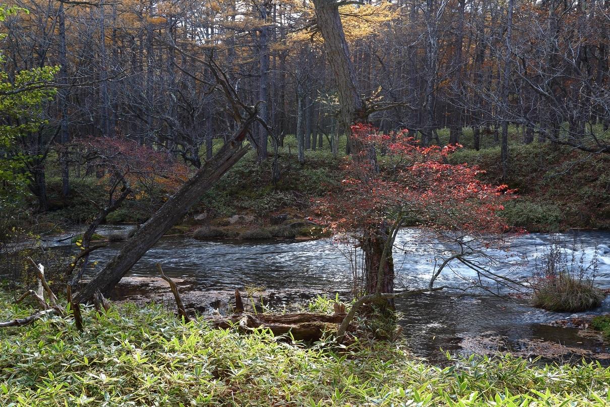 十月下旬の湯川`20㉕