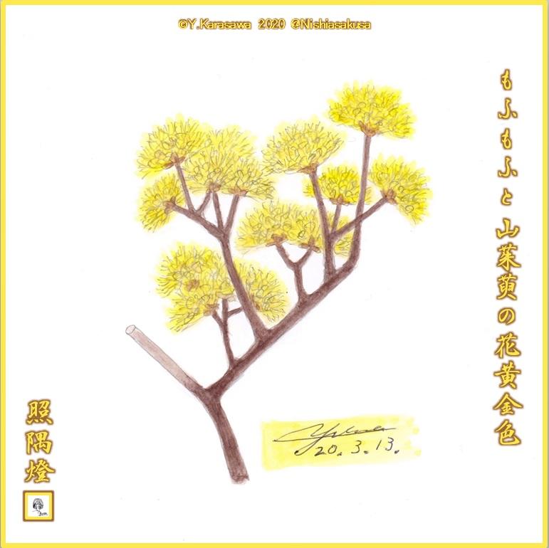 200313山茱萸LRG