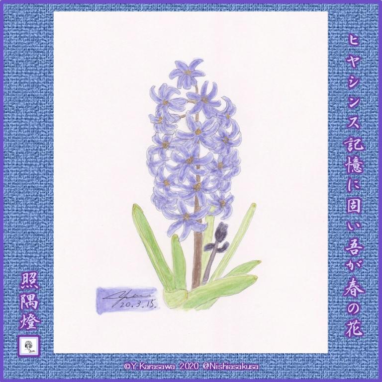 200315ヒヤシンス紫LRG