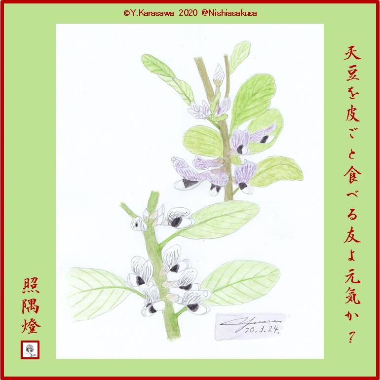 200324天豆の花LRG