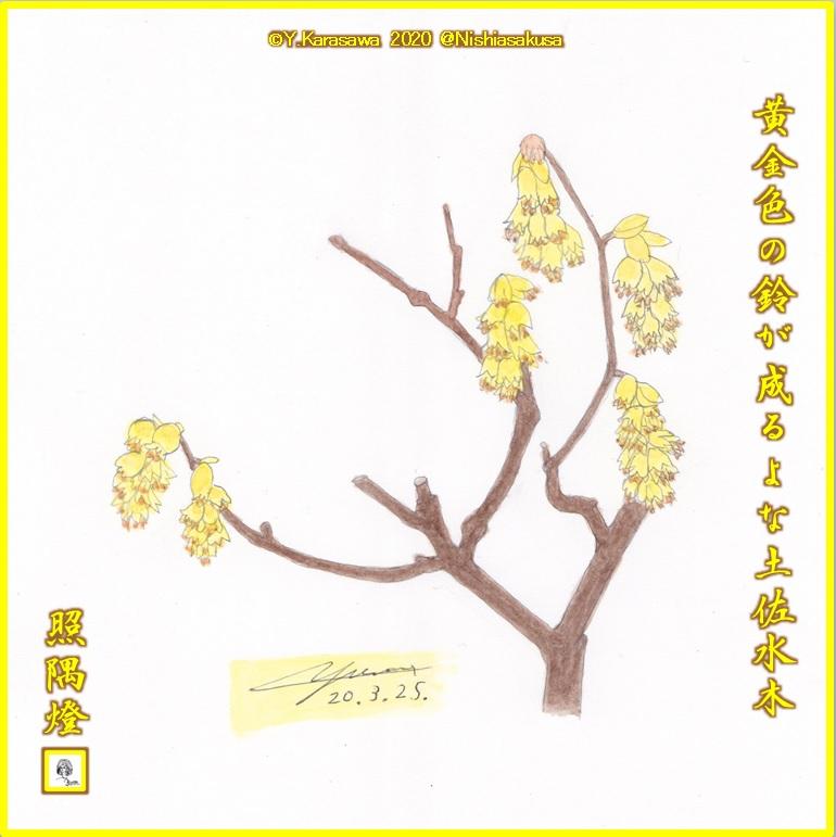 200325土佐水木LRG